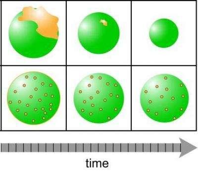 Scénario du haut : si les particules en suspension (AOS, en vert) sont déjà formées lorsqu'elles rencontrent les polluants (HAP, en jaune), ces derniers sont cantonnés en surface, et AOS et polluants se dissipent rapidement. Scénario du bas : quand les particules en suspension emprisonnent les polluants, AOS et polluants ont une durée de vie bien plus longue. © PNNL