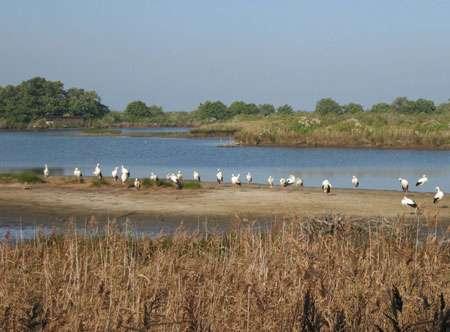 Le bassin d'Arcachon rassemble plus de 300 espèces d'oiseaux. Ici, des cigognes, à Le Teich. © DR