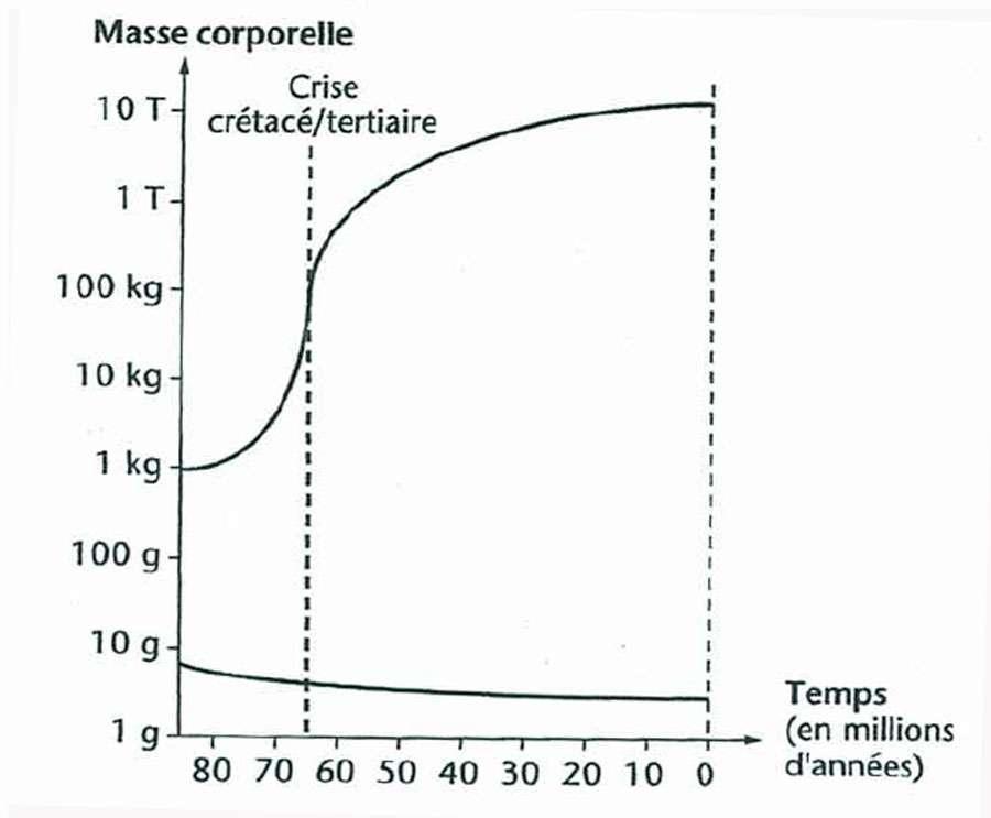 Évolution de la taille des mammifères terrestres du Crétacé supérieur au Tertiaire. © Jean-Louis Hartenberger