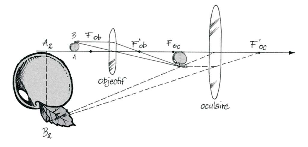 Le microscope comporte deux lentilles convergentes. L'image réelle de l'objet à travers la première lentille, l'objectif, est observée avec la seconde, l'oculaire, qui en donne une image virtuelle grossie. © EDP Science
