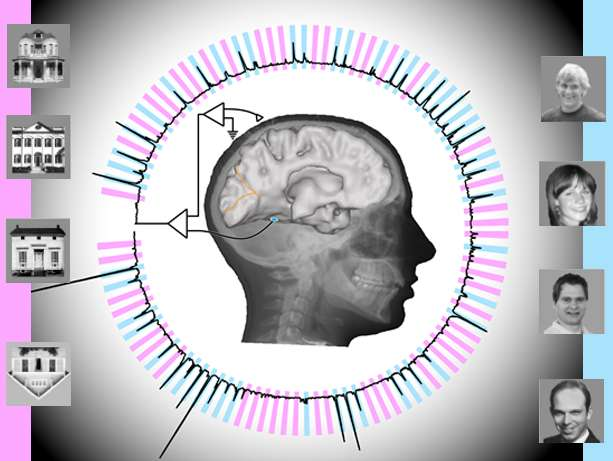 Cette infographie schématise les résultats obtenus par l'algorithme d'analyse des ondes cérébrales. En bleu, l'activité spécifique liée à la vision d'un visage ; en rose, celle associée à la vision d'une maison. © Kai Miller et Brian Donohue, university of Washington
