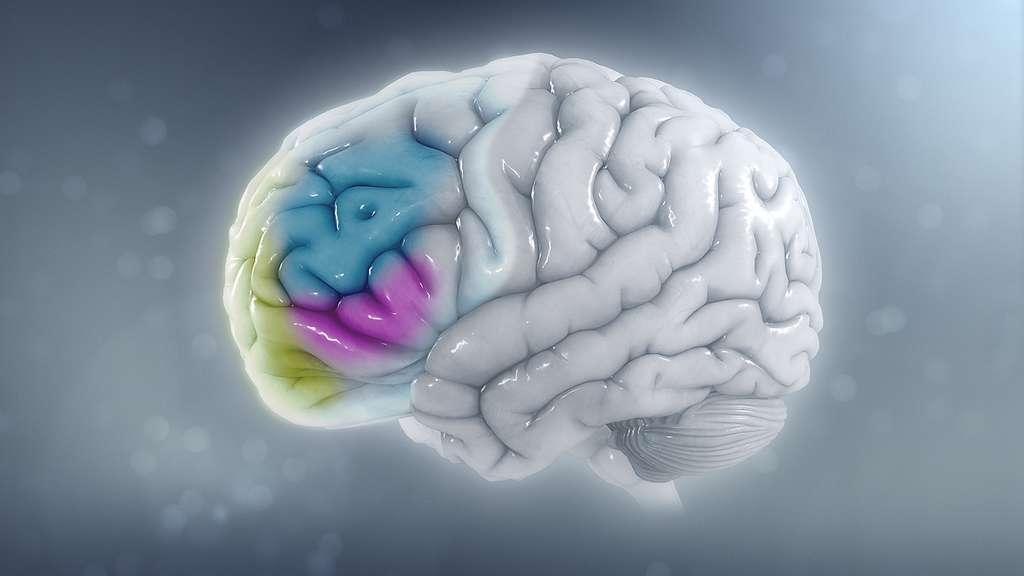 Signal de détresse au cerveau. © Scientificanimation, wikimedia commons, CC 4.0