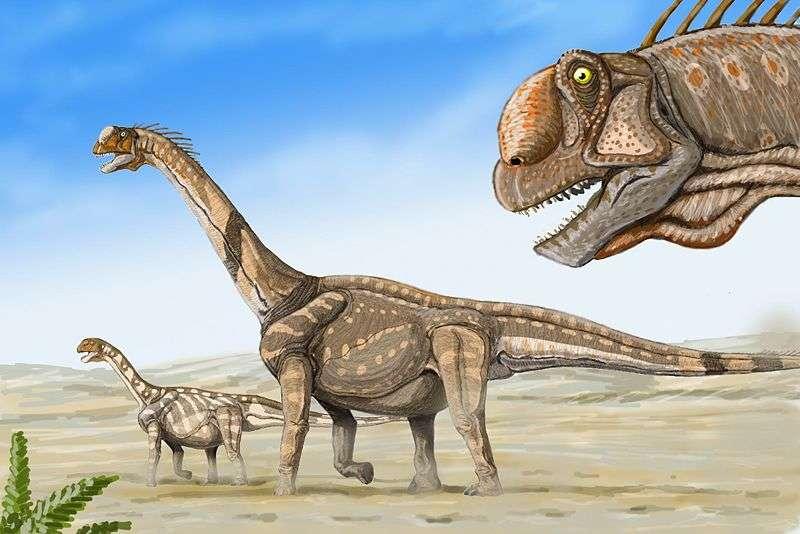 Trois Camarasaurus supremus en marche. Cette vue d'artiste est peut-être une bonne représentation des migrations de ces sauropodes géants... © Dmitry Bogdanov