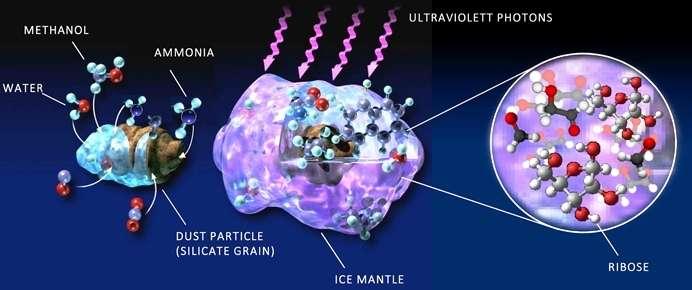 Le ribose se forme dans le manteau de glace des grains de poussière, à partir de molécules précurseurs simples (eau, méthanol et ammoniac) et sous l'effet de radiations intenses. © Cornelia Meinert (CNRS) & Andy Christie (Slimfilms.com)