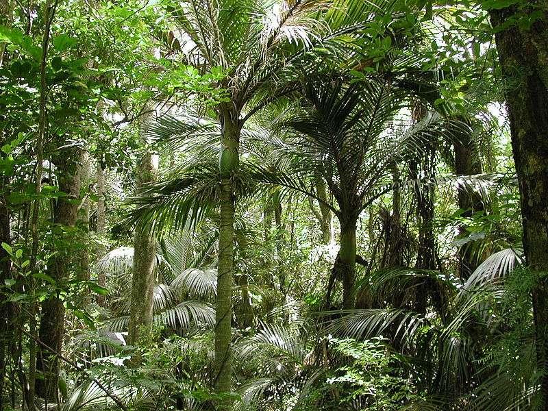 Nouvelle Zélande : Réserve Paraparaumu