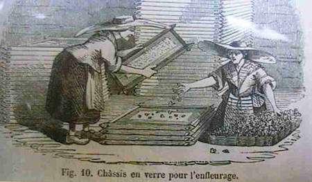 L'enfleurage est un procédé d'extraction des parfums. © DR