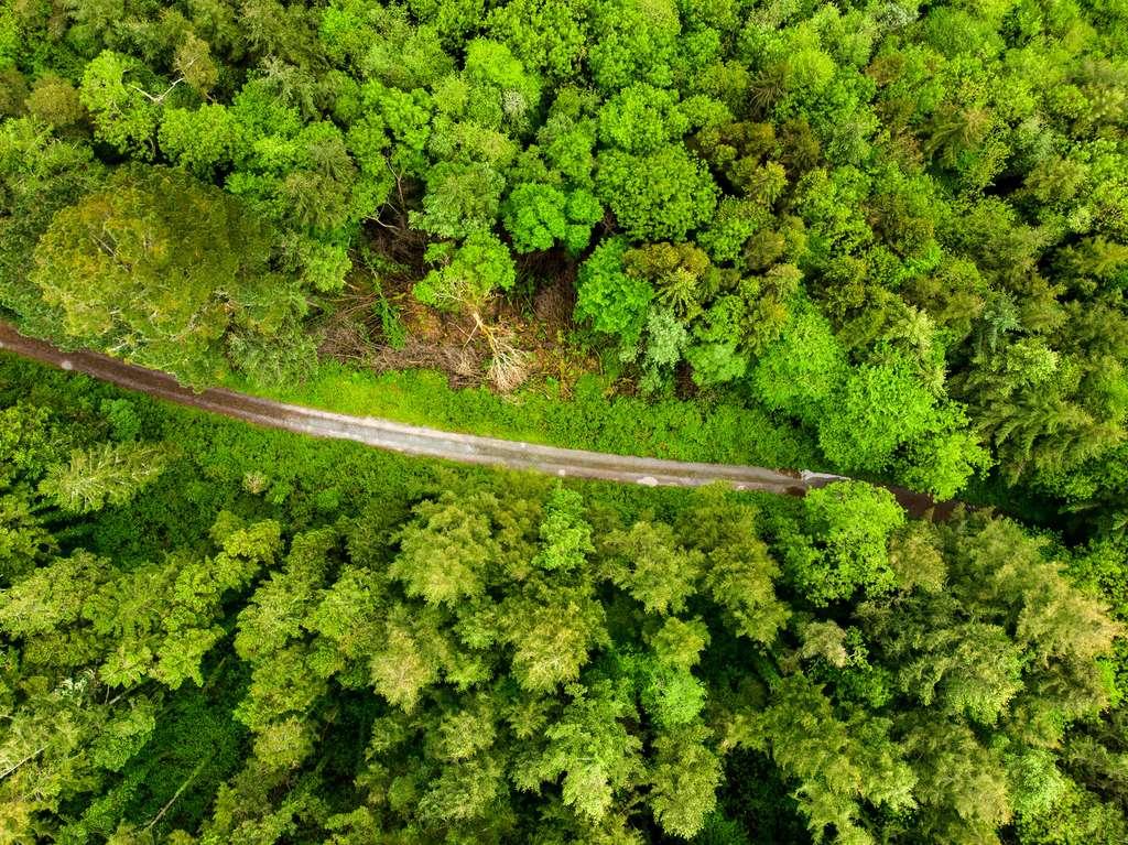 En Irlande, les vastes campagnes de reboisement d'épicéas ont fabriqué des « zones mortes écologiques ». © MNStudio, Fotolia