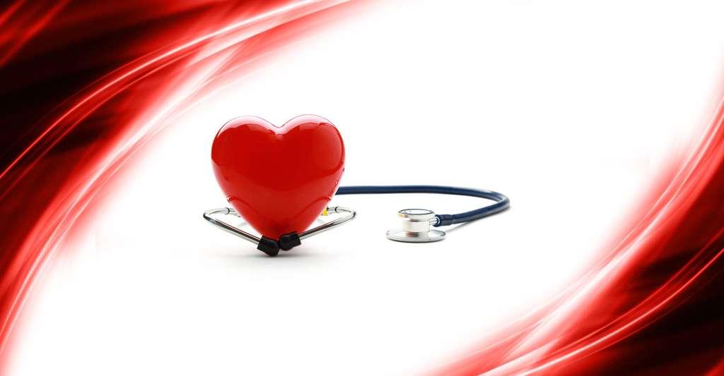 Quel est le fonctionnement du cœur ? © Sheff, Shutterstock