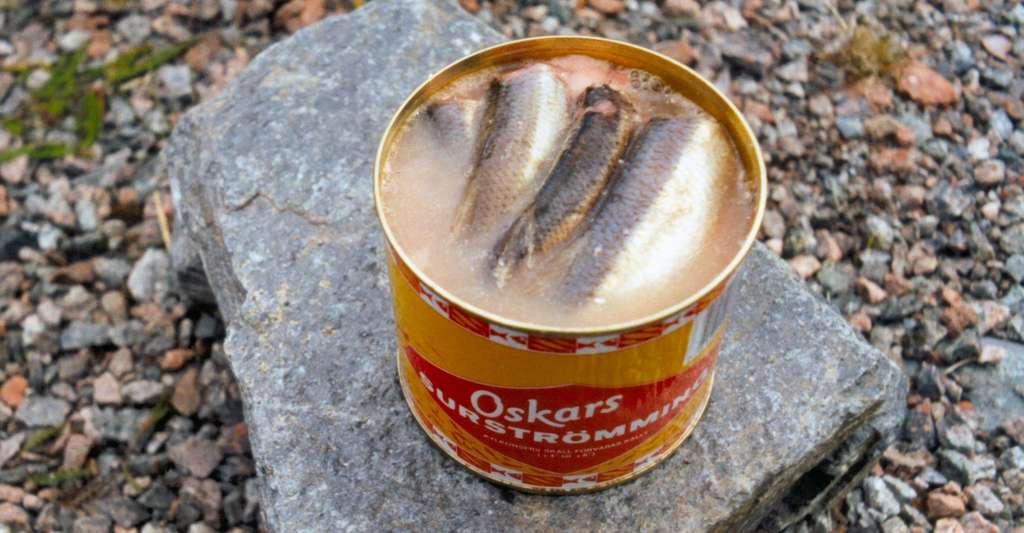 Le surströmming, une odeur dégoûtante, mais un goût divin selon les amateurs. © Lapplaender, Wikipédia, CC by-sa 3.0