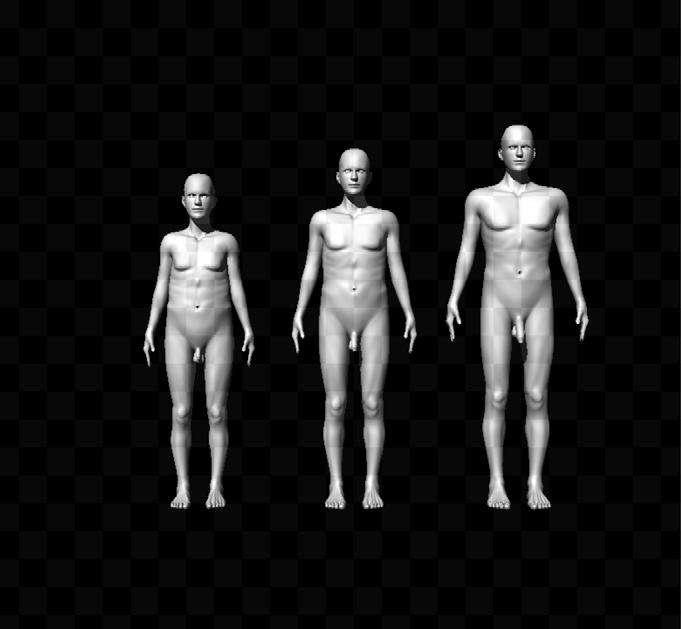 Les femmes participant à cette étude ont eu à noter différents avatars de ce genre, représentant des hommes dont la taille, la largeur d'épaules ou la longueur du pénis variait. © Mautz et al., Proceedings of the National Academy of Sciences of the United States of America