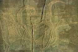 Boeuf avec des cornes en lyre. Le dessin de la robe est rendu par des lignes spiralées (Tin Abedine) et sur l'image de droite, les colliers et pendeloques caractéristiques de la domestication sont très visibles (Tan Ekli)