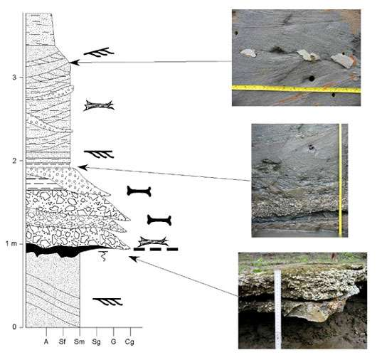 Section litho-stratigraphique relevée sur un des affleurements étudiés lors de l'Expédition Fitzcarrald. © N. Espurt Reproduction et utilisation interdites