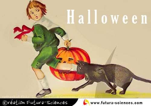 Halloween, chat noir ...