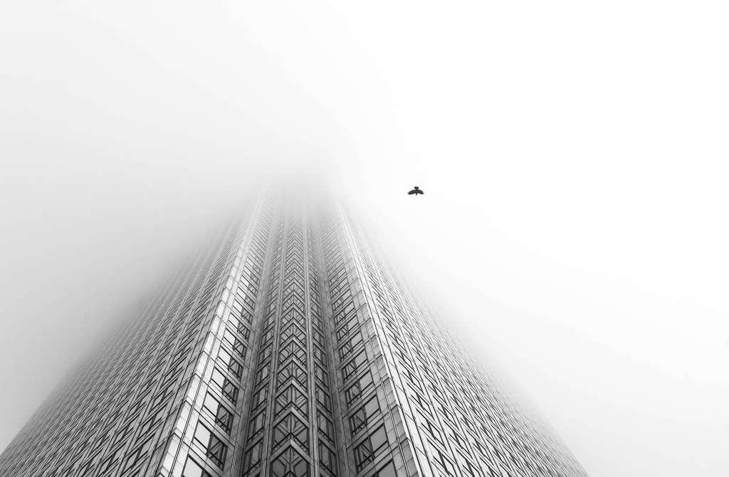 L'immeuble disparaît dans le brouillard londonien. Quel est cet oiseau qui semble être le seul habitant de la ville ? © Chaitanya Deshpande, BWPA 2016