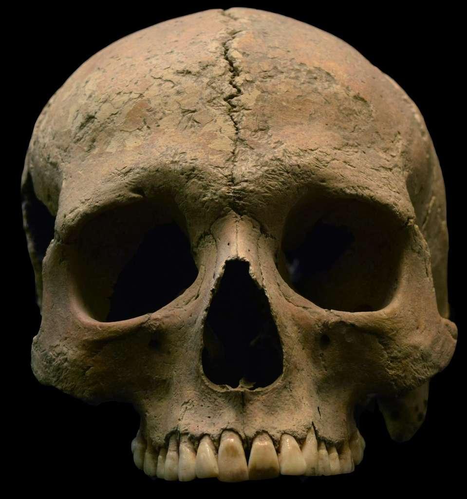 Crâne provenant de Velia. Un individu de Velia portait de l'ADN mitochondrial de Plasmodium. © Luca Bandioli, Pigorini Museum