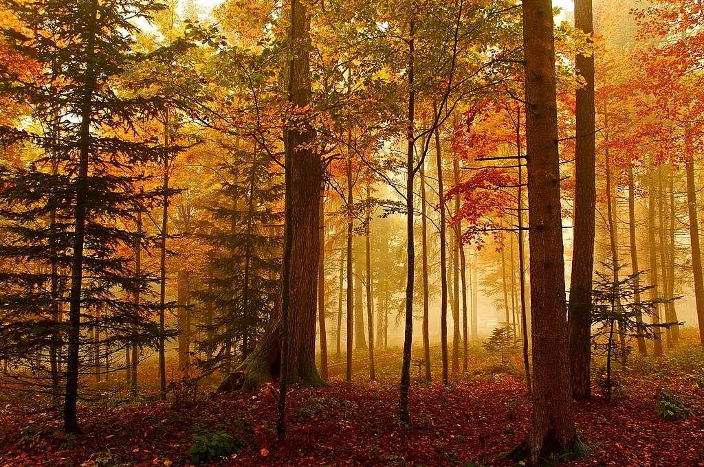 Quando le loro foglie cadono, gli alberi non assorbono più CO2. © Jean-Daniel Echenard, Flickr