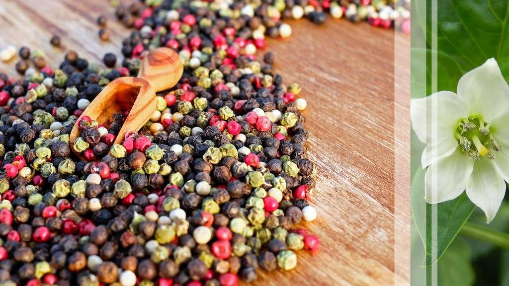 Le poivre, une épice aux mille couleurs