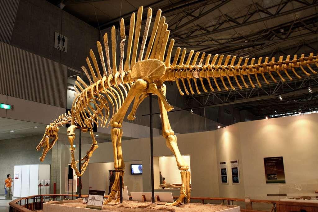 Le Spinosaurus, un dinosaure théropode