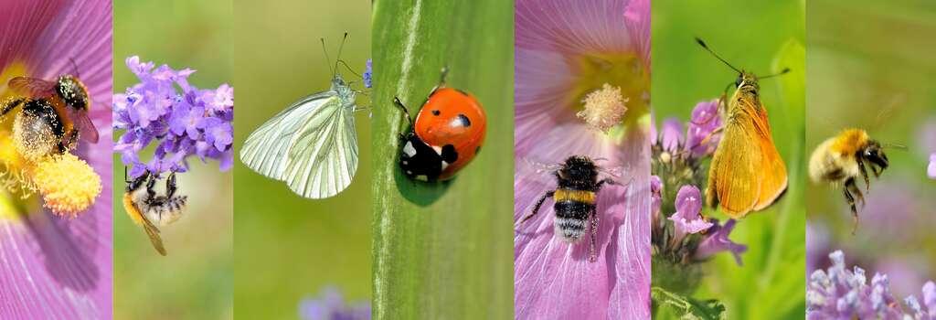 Les insectes sont indispensables à la survie des êtres humains. © Coco, Adobe Stock