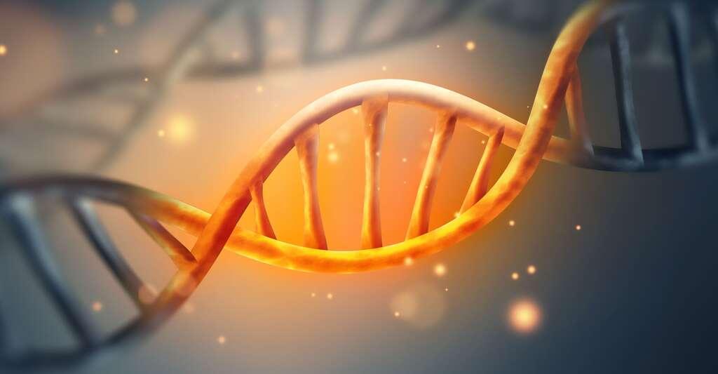 Gènes, œstrogènes et cerveau : quel rapport ? Ici, un brin d'ADN. © Zffoto, Fotolia
