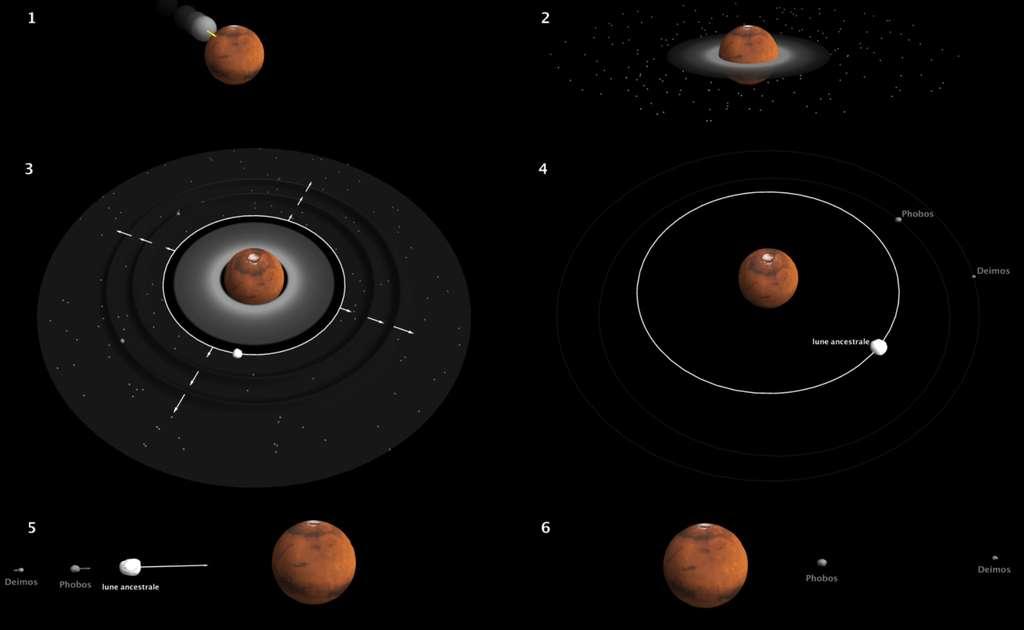 Chronologie des évènements qui auraient donné naissance à Phobos et Deimos. 1. (en haut à gauche) : Mars est percutée par une protoplanète trois fois plus petite. Un disque de débris se forme en quelques heures. 2. Les briques élémentaires de Phobos et Deimos (grains de taille inférieure au micromètre) se condensent directement à partir du gaz dans la partie externe du disque. 3. Le disque de débris produit rapidement une lune proche de Mars, qui s'éloigne et propage ses deux zones d'influence comme des vagues. 4. Ce processus provoque en quelques millénaires l'accrétion des débris plus éloignés en deux petites lunes, Phobos et Deimos. 5. Sous l'effet des marées soulevées par Mars, la grosse lune retombe sur la planète en quelques millions d'années. 6. Les satellites Phobos et Deimos, moins massifs, rejoignent leur position actuelle dans les milliards d'années qui suivent. © Antony Trinh, Observatoire Royal de Belgique