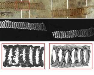 Images d'un fossile de 650 millions d'années, trouvé au Kazakhstan En haut : Image optique du fossile (microscope optique) Au milieu : Image obtenue à l'aide d'un microscope confocal En bas à gauche : Zoom sur une partie de l'image obtenue par le microscope confocal En bas à droite : Image de la chimie de l'échantillon, obtenue à partir des données du spectroscope Raman (Crédits : UCLA)
