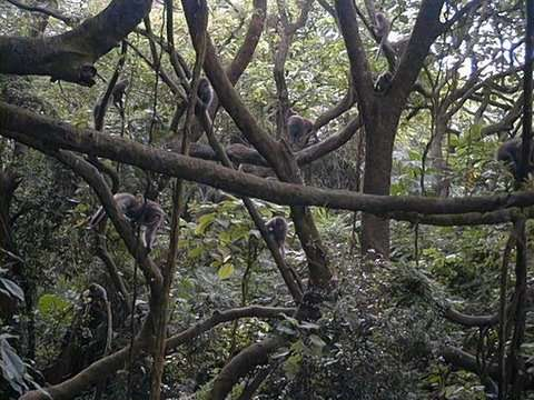Groupe de macaques de Formose in natura. © Minna J. Hsu, domaine public