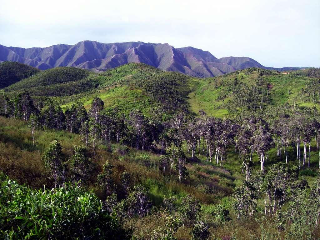 Les forêts sèches de Nouvelle-Calédonie en grand danger