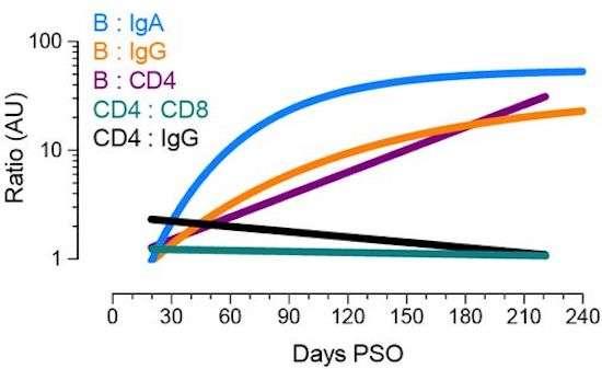 Évolution des différentes composantes de la réponse immunitaire près l'infection : anticorps IgA, IgB, IgG, lymphocytes T CD4 et CD8. © Jennifer Dan et al., bioXriv, 2020