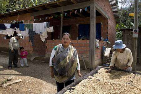 Rosa Mamani pose devant la nouvelle maison de son père en compagnie de ce dernier accompagné de son fils, et de sa mère qui contrôle le séchage du café. Autrefois, Rosa travaillait à La Paz, la capitale bolivienne, où elle était victime de discriminations. Voyant que, grâce au commerce équitable, le café était payé un prix juste et stable, elle a choisi d'acheter de la terre près de celle de son père, dans la région des Yungas. © Max Haavelar - Photo Bruno Fert - Tous droits réservés