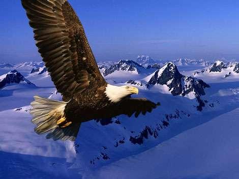 Aigle. © Reproduction et utilisation interdites