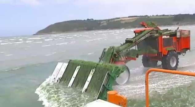 Sur les plages bretonnes, les nouveaux tractopelles vont chercher les algues sous l'eau. © R. Bonnant, M. Hivert, T. Paulin, France 2, DR