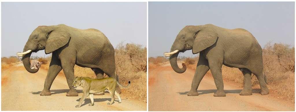 Des images truquées circulent sur Internet. © capture écran Twitter, Wikipédia