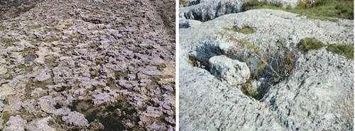 Les lapiaz se forment sur des surfaces calcaires. Ils sont caractéristiques d'une érosion karstique. © DR
