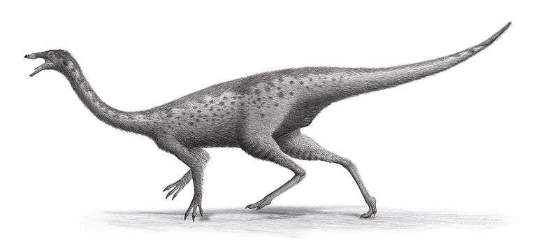 Cette reconstitution représente un Gallimimus, ou le dinosaure « qui imite la poule ». Pourra-t-on recréer des animaux semblables ? © Steveoc 86, Wikipédia, cc by sa 3.0