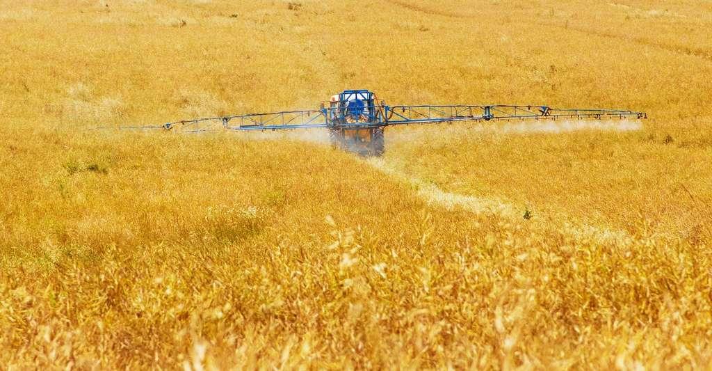 Pour les chercheurs de l'université de Munich (Allemagne), l'agriculture est responsable du déclin marqué des insectes depuis quelques années. Pourtant, elle dépend énormément des capacités de pollinisation de ces mêmes insectes. © PublicDomainPictures, Pixabay License