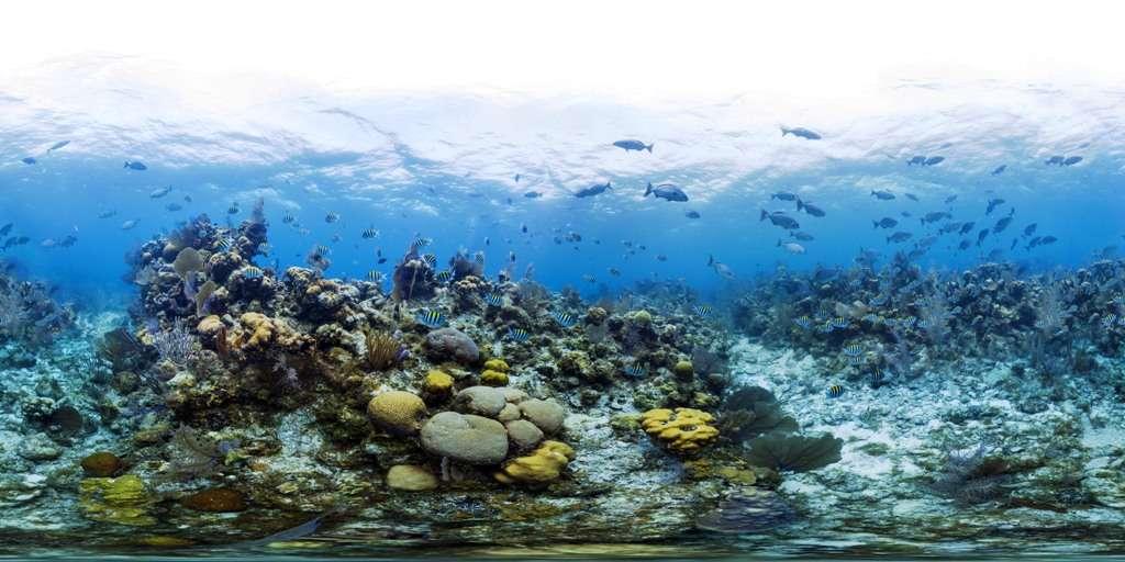 Le récif corallien de Lighthouse Reef qui apparaît sur cette image est en pleine santé. On peut le voir notamment parce qu'il abrite de nombreux poissons. © Catlin Seaview Survey