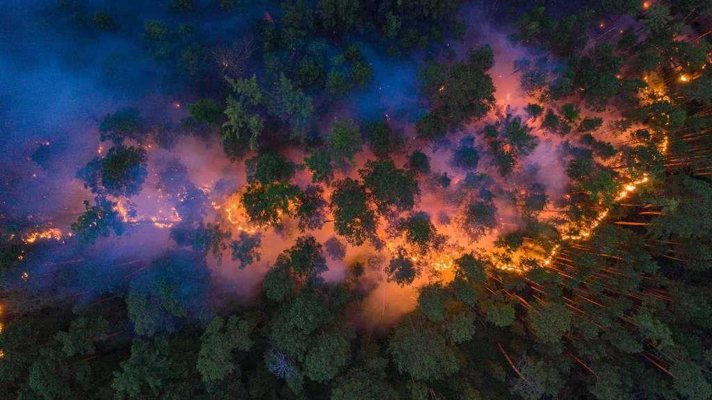 Près de 11 millions d'hectares de forêt ont brûlé en Russie depuis le début de 2020. © Greenpeace