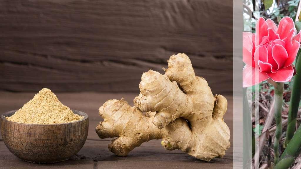 Le gingembre, une plante médicinale ancienne