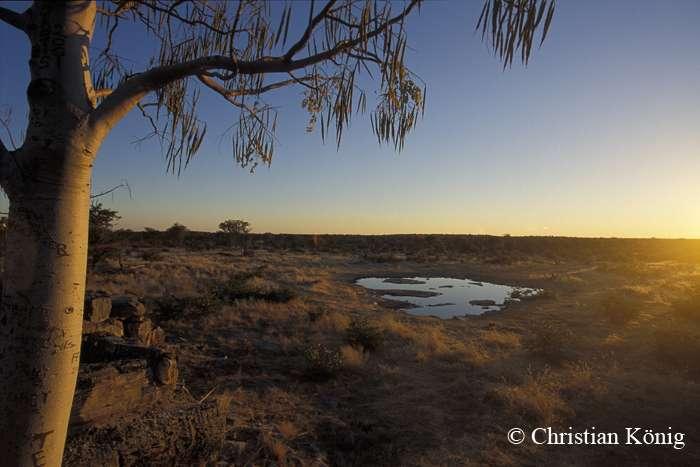 Un point d'eau dans le parc national d'Etosha. © Christian König, DR