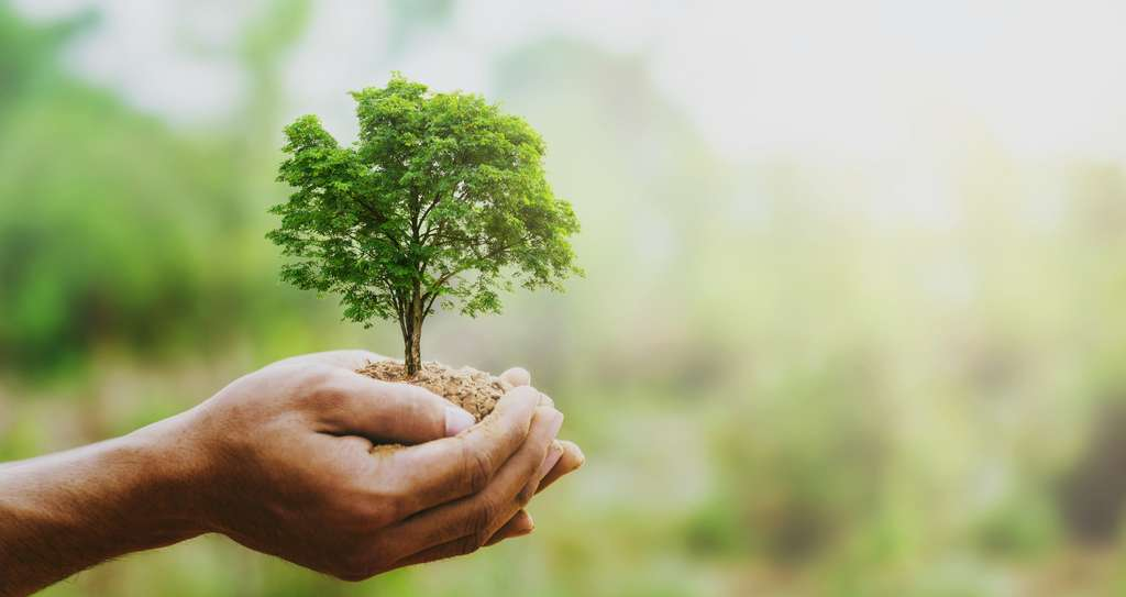 Aux yeux de Vincent Mignerot, il paraît invraisemblable que l'humanité puisse devenir protectrice de la nature. © Lovelyday12, Adobe Stock