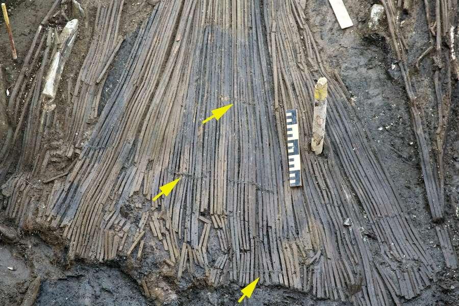Les pièges en bois permettaient de diriger les poissons vers un réservoir. Les flèches indiquent les liens faits de tissus végétaux. © CSIC