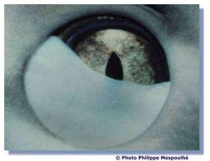 Un œil de requin. © P. Mespoulhé