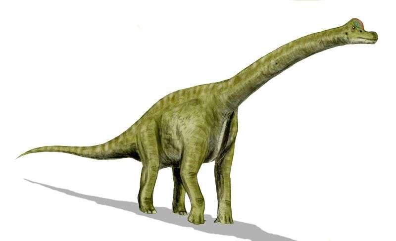 Le brachiosaure, l'un des plus grands sauropodes
