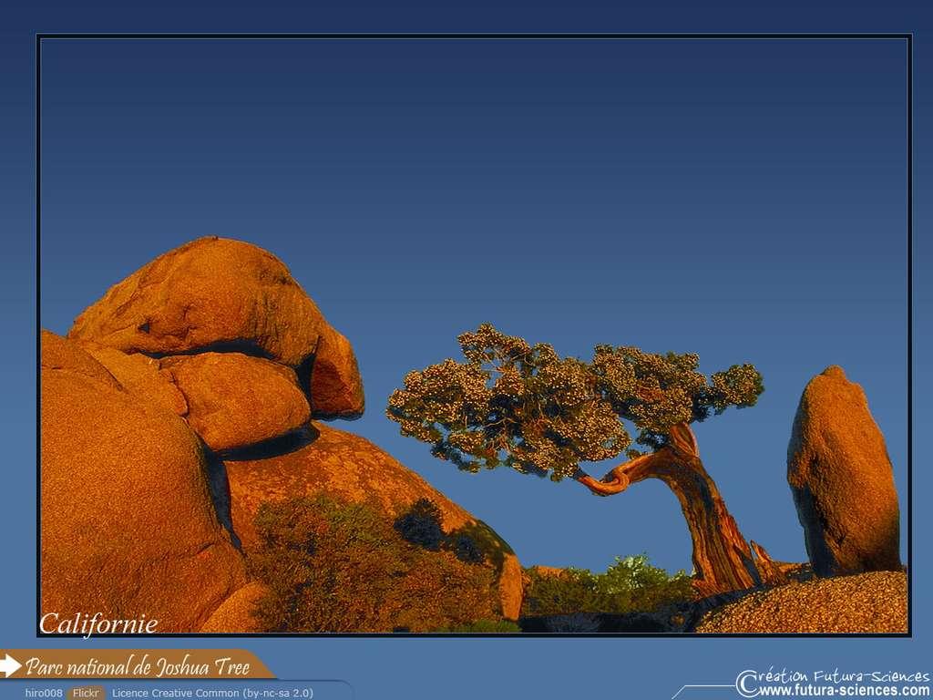 Parc National de Joshua Tree