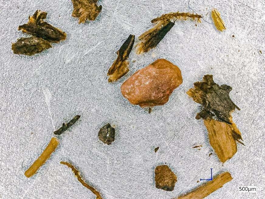 https://cdn.futura-sciences.com/buildsv6/images/mediumoriginal/5/8/3/58357eeeb0_50174208_fossiles-vegetaux-groenland.jpg