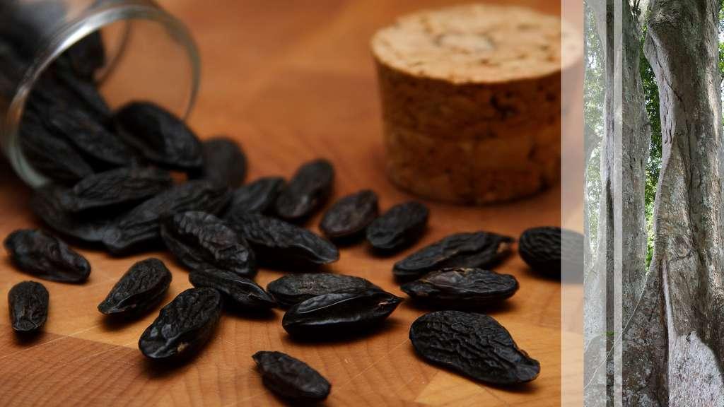 La fève de Tonka, l'épice riche en arôme