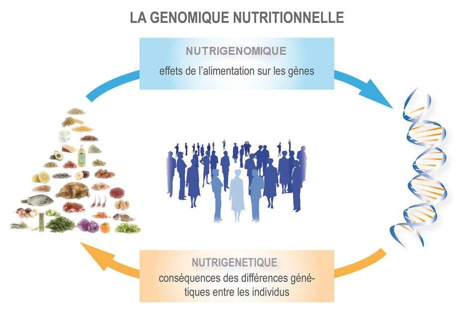 La nutrigénomique étudie les effets de l'alimentation sur le patrimoine génétique, tandis que la nutrigénétique se concentre sur les particularités génétiques de chacun. © DR