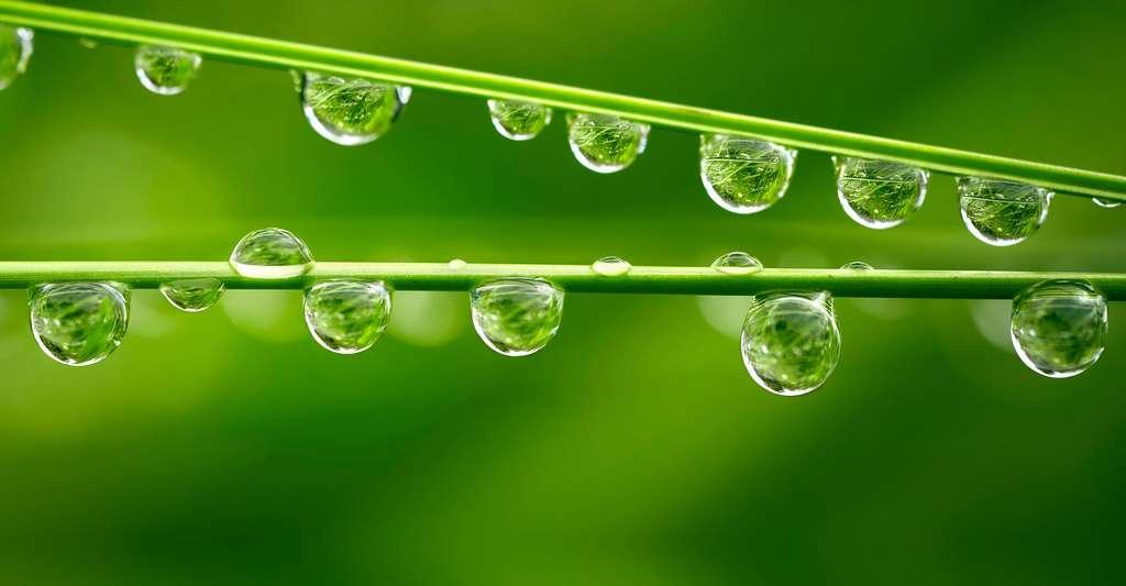 La récupération de l'eau de pluie a un prix. Ici, des gouttes d'eau sur des tiges. © SJ Travel Photo and Video, Shutterstock