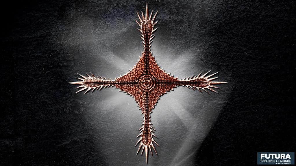Histiastrum Boseanum. © Ernst Haeckel, Wikimedia commons, DP